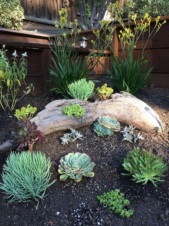 Urban Garden Studio, Garden Landscape Design, Succulent Planters, Landscapes,  Live Plants,