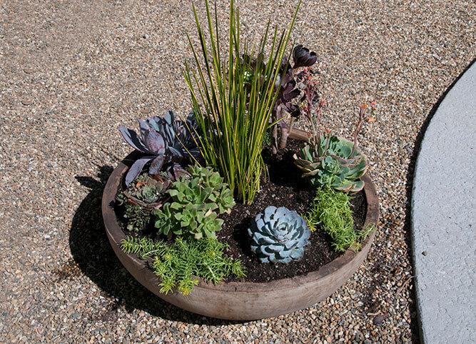 Urban garden studio, desert landscape design, Succulent planters, landscapes, live plants, planters, landscaping, succulents, succulent arrangements, succulent garden, cactus, cacti, succulents planters