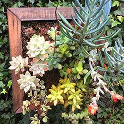 Living wall, succulent box, living wall art, live plants. air plants, rustic wood planter
