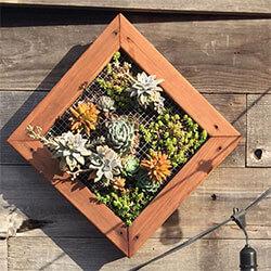 Living wall, succulent box, living wall art, live plants. air plants, rustic wood planter, rustic decor, rustic decor frames, rustic wall art decor