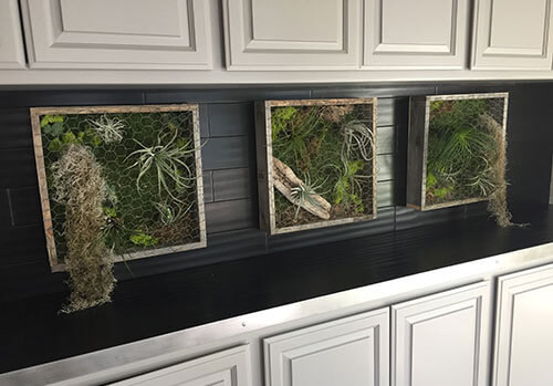 Vertical wall garde, Living wall, reclaimed wood, moss, succulents, ferns, air plants, planters, office design, interior design, succulent boxes, airplant boxes, live plant art, rustic decor, living garden wall art, succulent vertical living wall art